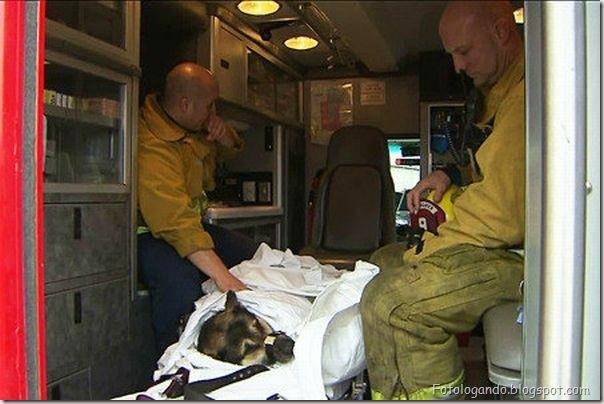 Dramático resgate de um cachorro (12)