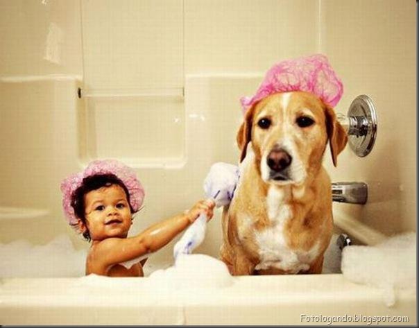 Cães no banho (11)
