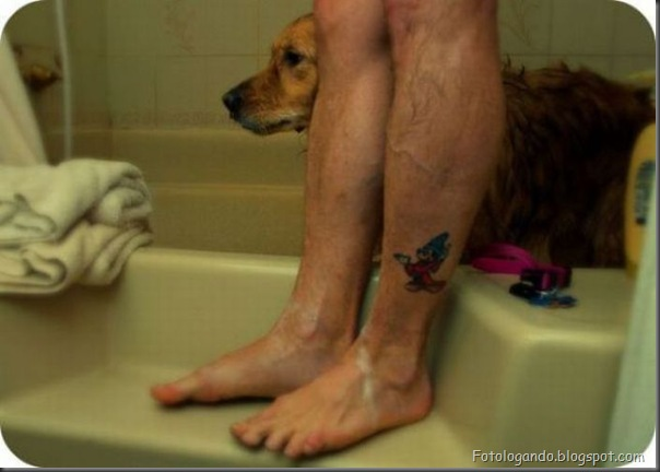 Cães no banho (4)