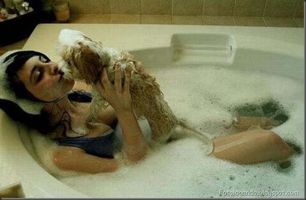 Cães no banho (20)