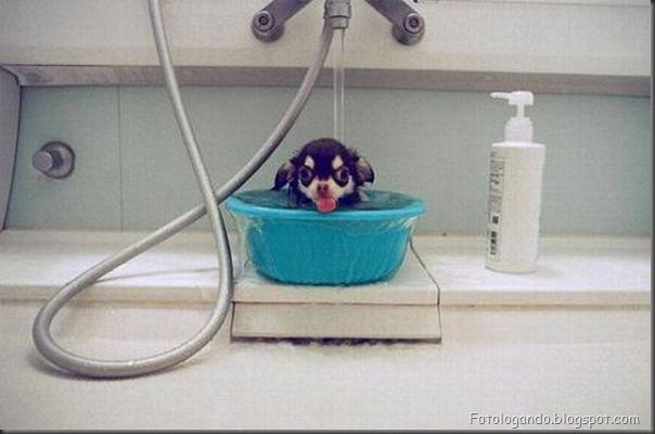 Cães no banho (19)