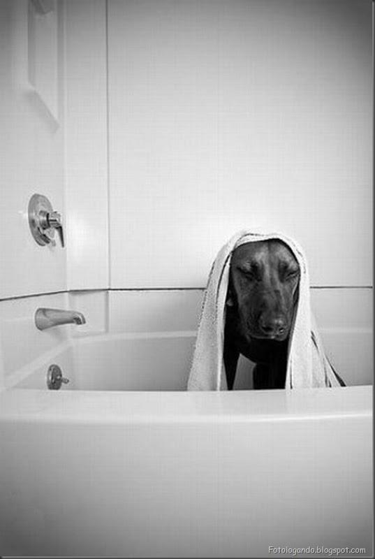 Cães no banho (16)