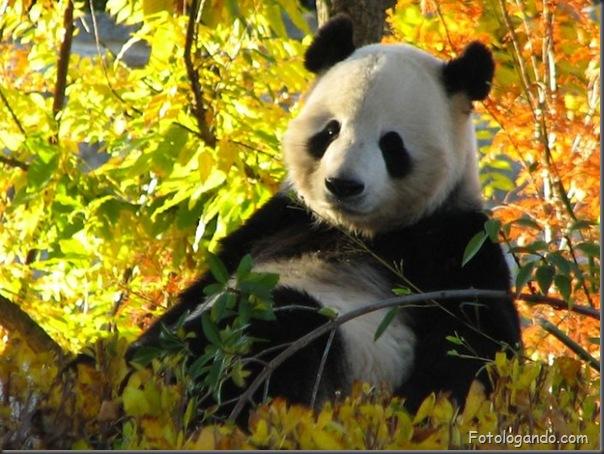 Fotos de animais no zoo capturadas no momento certo (16)