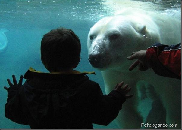 Fotos de animais no zoo capturadas no momento certo (26)
