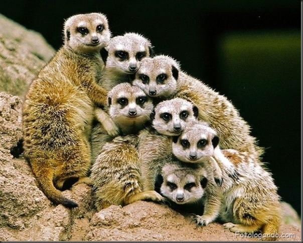Fotos de animais no zoo capturadas no momento certo (12)
