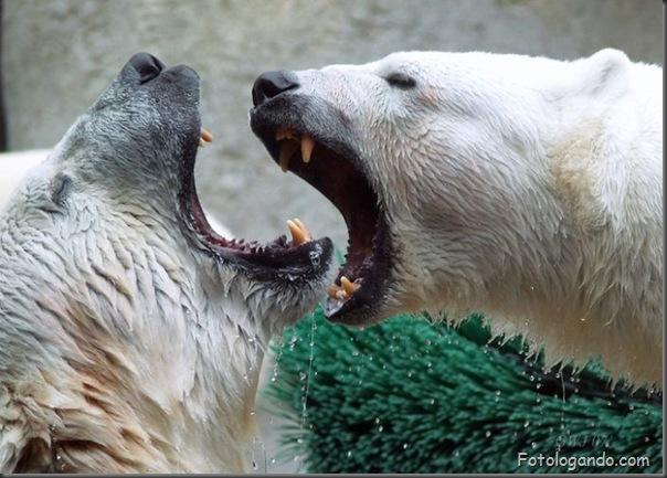 Fotos de animais no zoo capturadas no momento certo (3)