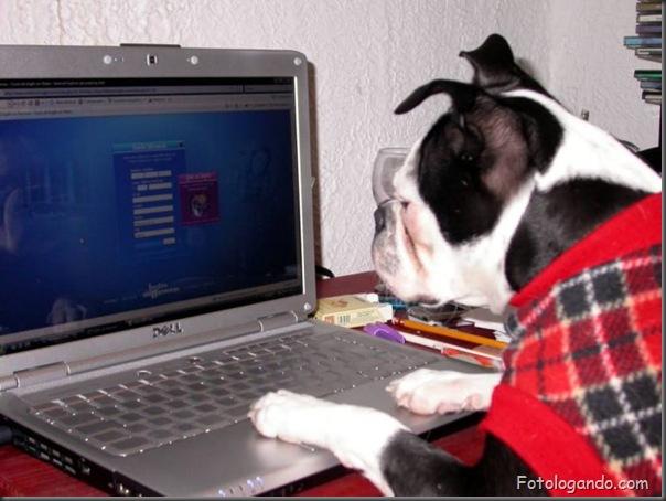 Animais no computador (9)
