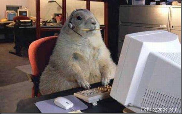 Animais no computador (3)