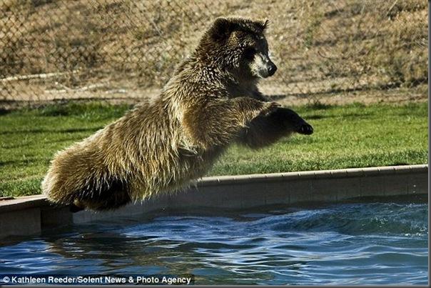 Urso brincando com treinador no zoológico (5)
