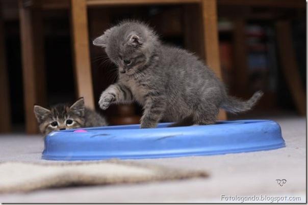 momento oinn especial gatos (16)