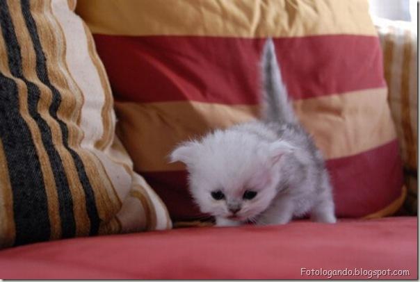 momento oinn especial gatos (26)