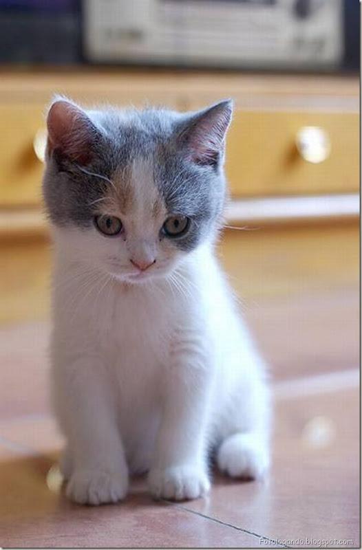 momento oinn especial gatos (41)