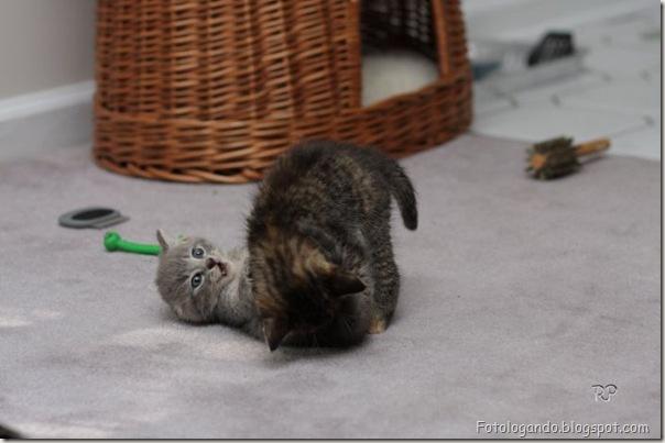 momento oinn especial gatos (10)