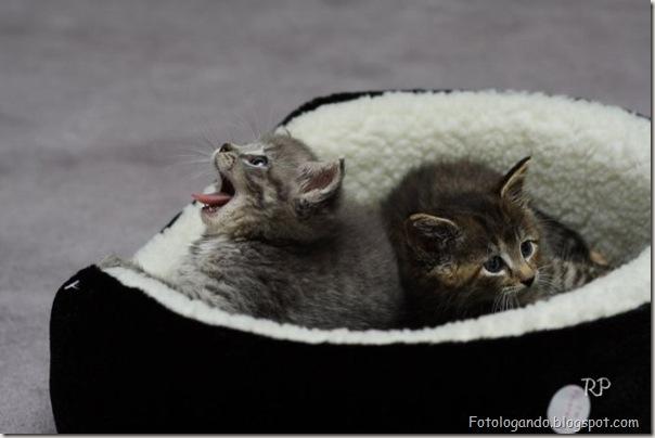 momento oinn especial gatos (5)
