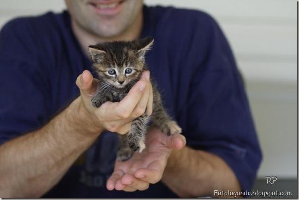 momento oinn especial gatos (3)