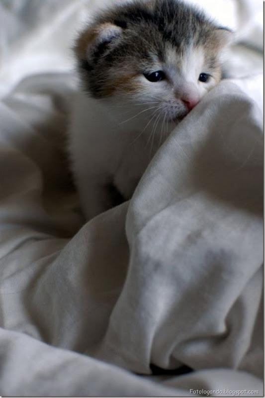 momento oinn especial gatos (31)