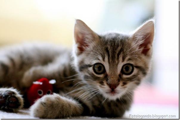 momento oinn especial gatos (46)