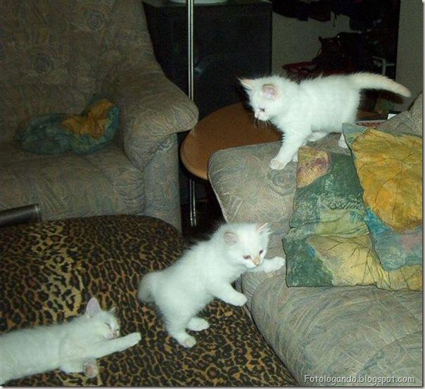 momento oinn especial gatos (39)