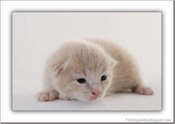 momento oinn especial gatos (35)