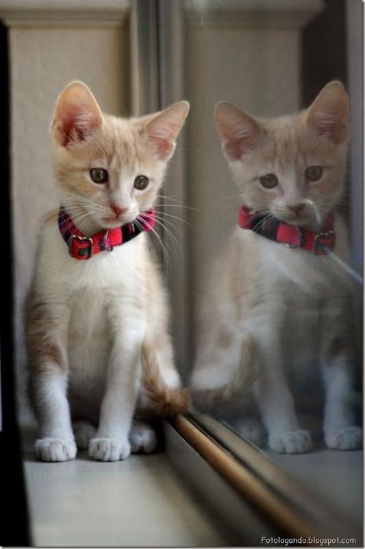 momento oinn especial gatos (64)