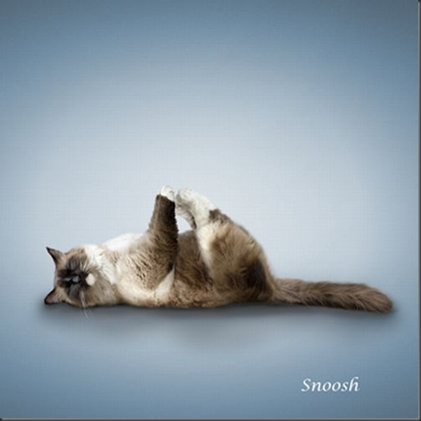 A yoga dos gatos (11)