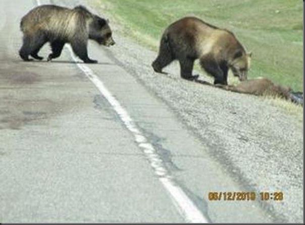Jantar romantico entre ursos (14)