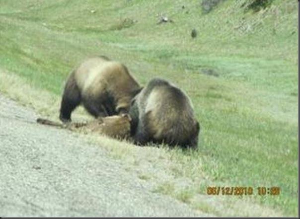 Jantar romantico entre ursos (15)