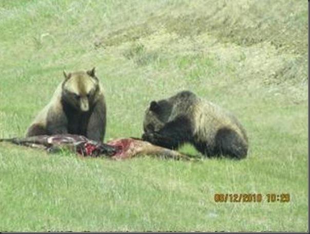 Jantar romantico entre ursos (18)