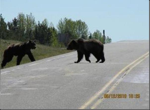 Jantar romantico entre ursos (3)