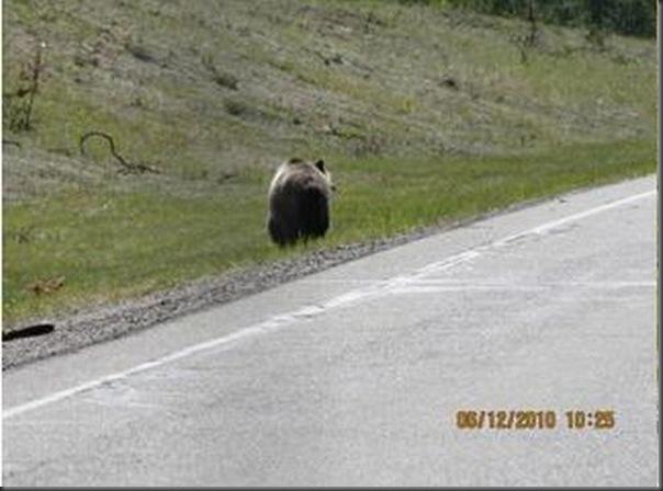 Jantar romantico entre ursos (4)