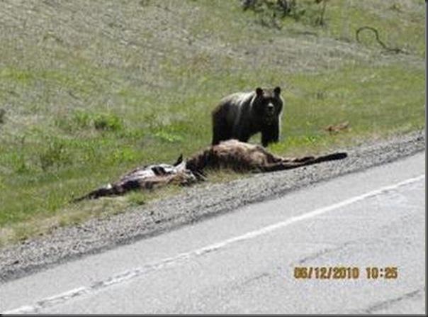 Jantar romantico entre ursos (5)