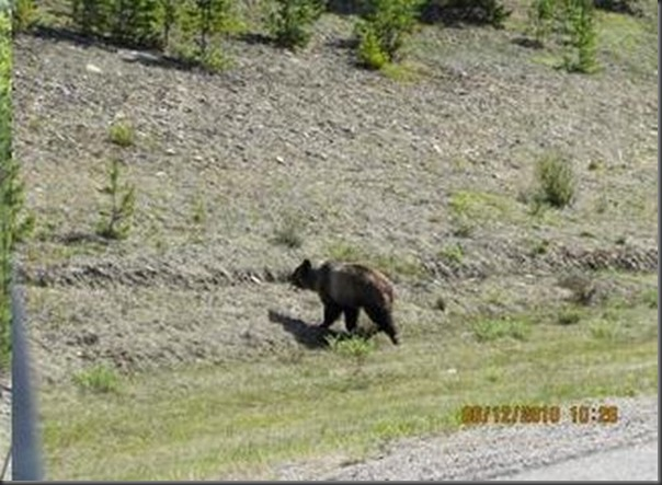 Jantar romantico entre ursos (7)