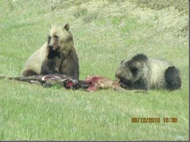 Jantar romantico entre ursos (19)