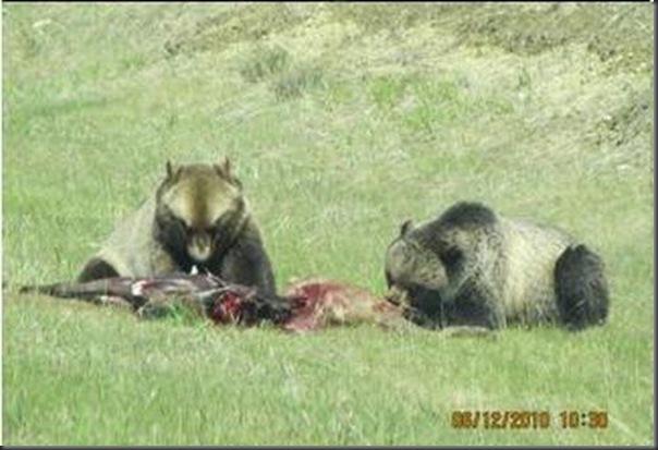 Jantar romantico entre ursos (20)