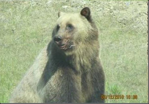 Jantar romantico entre ursos (21)