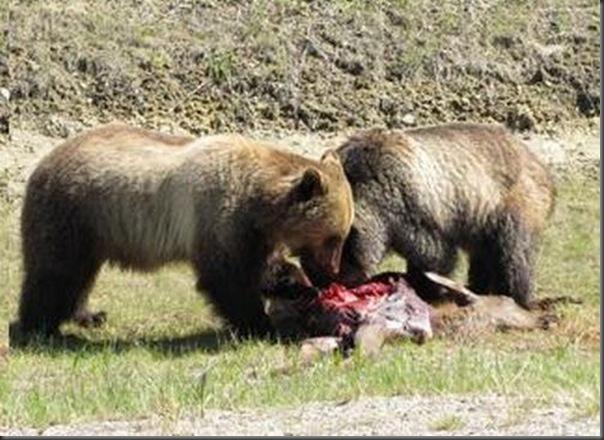 Jantar romantico entre ursos (25)