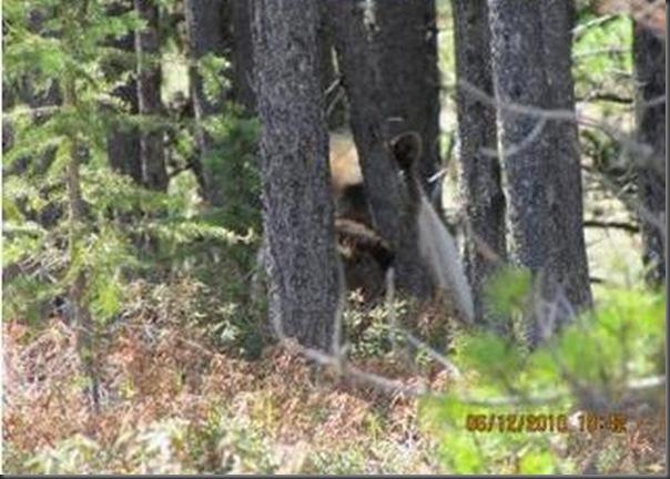 Jantar romantico entre ursos (40)
