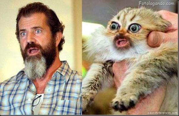 Mel Gibson e gato assustado