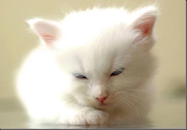 Um gatinho que parece um brinquedo (2)