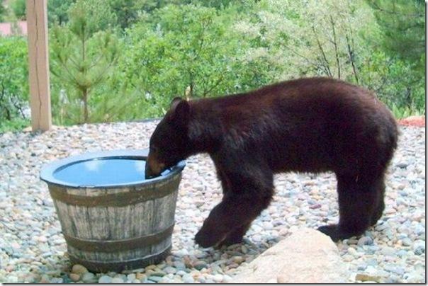 Por que o barril de água sempre está vazio (1)