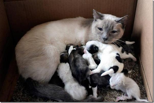 Animais adotados (4)