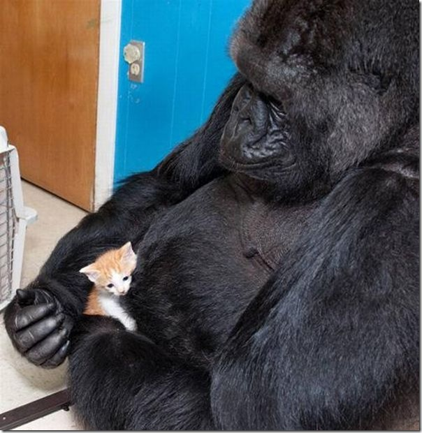 animal_adoptions_10