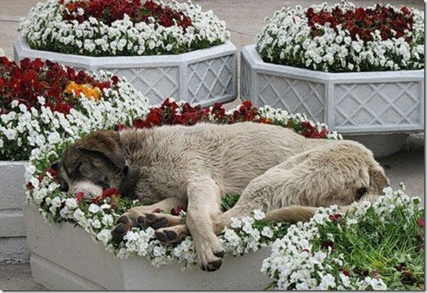 Animais fofos dormindo (7)