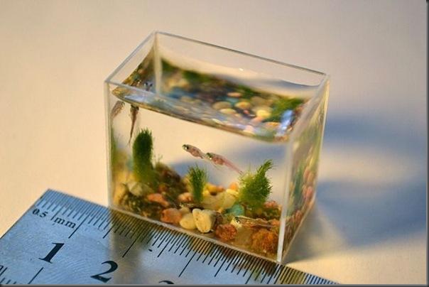 O menor aquário do mundo (1)