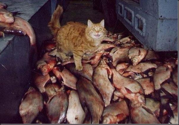 Sonho de todo gato
