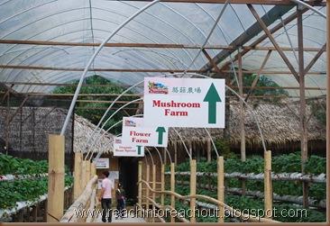 Mushroom Farm , Flower Farm, Organic Farm