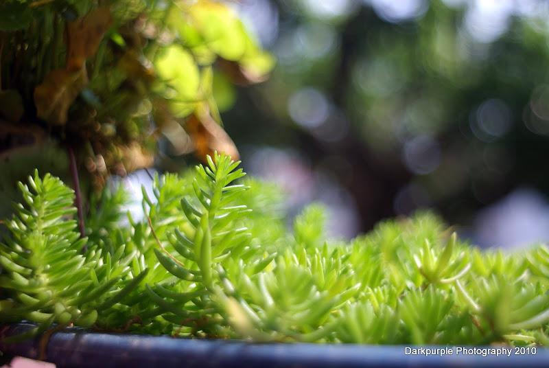花花草草 by Pentacon 29mmF2.8