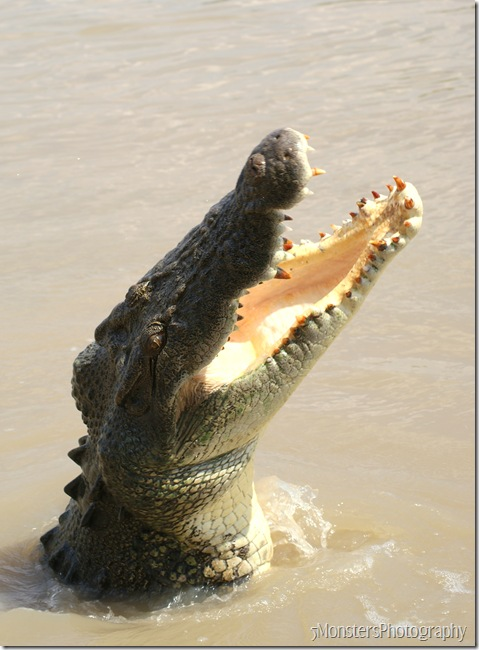 crocs41