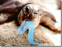 turtle_eating_plastc_bag