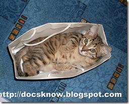 Принесенный из аптеки кот